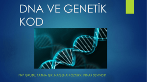 dna ve genetik kod sunum