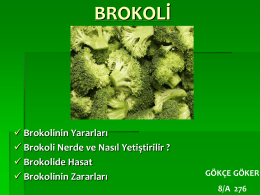 brokoli - Healthy Me! Healthy You!