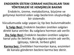endokrin sistem hast.