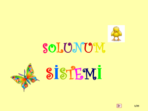 soLUN - WordPress.com