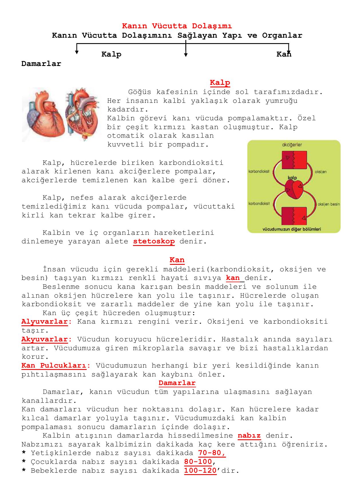 Kalbin görevleri kalbin çalışması kalbin hızlı atması