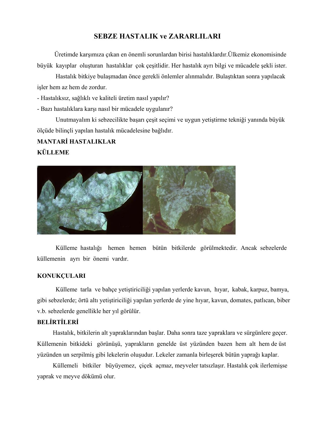 Domates yapraklarında sarı lekeler: görünümün nedenleri ve mücadele yöntemleri