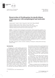 (Asparagaceae) with morphological and molecular data