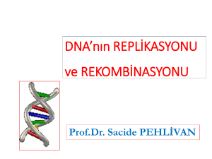 DNA`nın REPLİKASYONU ve REKOMBİNASYONU