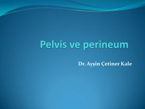 Pelvis ve perineum